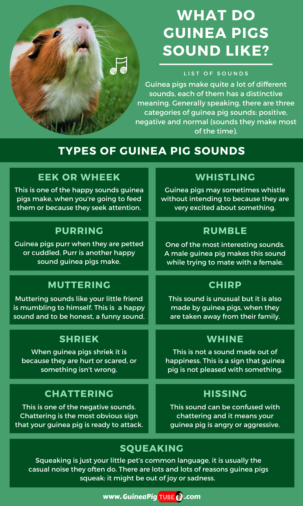 Pin On Guinea Pigs Behavior