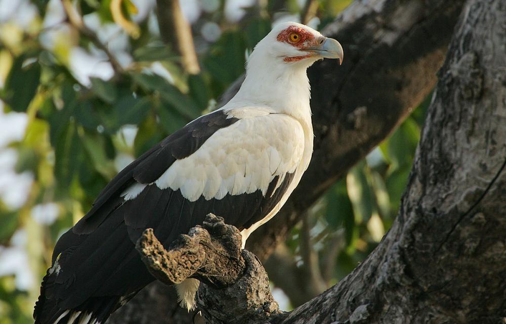 Pin By Lauren Mattson On Aerial Animals Species Types And Groups In 2020 Animals Birds Of Prey Largest Bird Of Prey