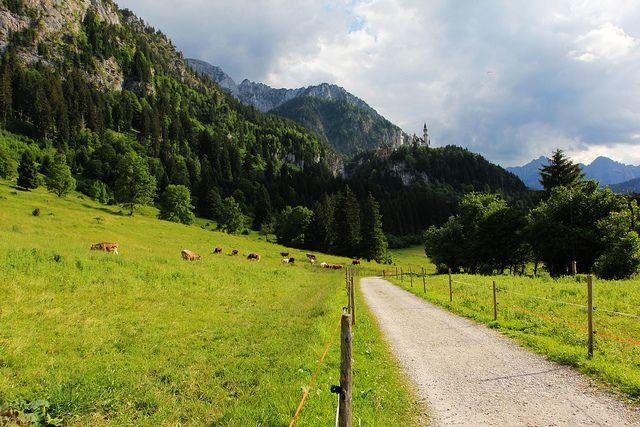 Tegelbergbahn纜車站附近眺望新天鵝堡schloss Neuschwanstein Germany Country Roads Visiting Germany