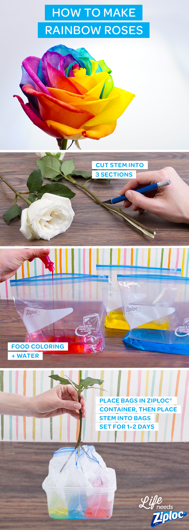 Brighten up your house with these gorgeous rainbow roses. It's simple: just spilt a stem 3 ways (use a knife with parental supervision), then dip into 3 Ziploc® Slider bags filled with different-colored dyes. An inexpensive and DIY way to make mom's day or a great rainy day craft to do with the kids. #rainbowroses
