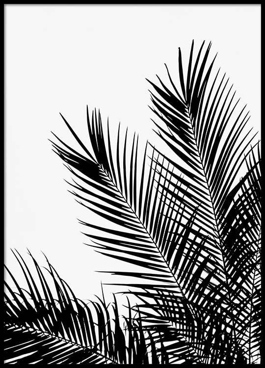 Black palm tree one Poster in der Gruppe Poster / Größen und Formate / 50x70cm bei Desenio AB (3523) #deseniobilderwand