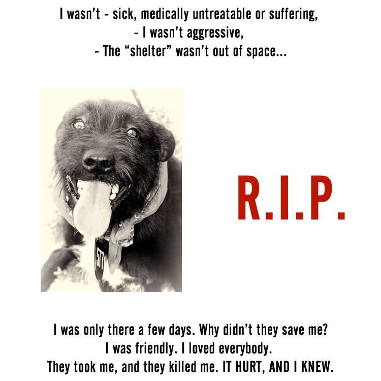Timeline Photos No Kill Coalition Animal Protection Quotes Protection Quotes Animals