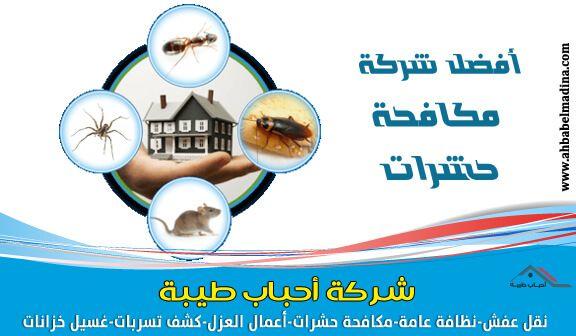 شركة مكافحة حشرات بجازان رش مبيدات مع الض مان Pest Control
