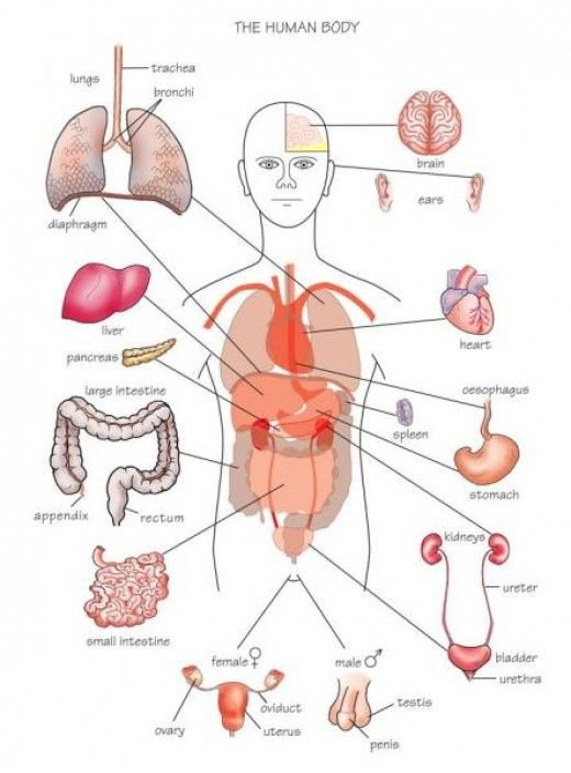 A Z Of Medical Terminology 1 Know Your Roots Med Term Human