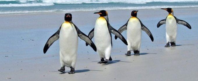 Pinguinos En Peligro De Extincion 2 Animales En Peligro De Extincion Documentales De Animales En Peligro De Extincion