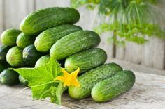 gurken aus samen selber ziehen anleitung green glorious green pinterest gurken. Black Bedroom Furniture Sets. Home Design Ideas
