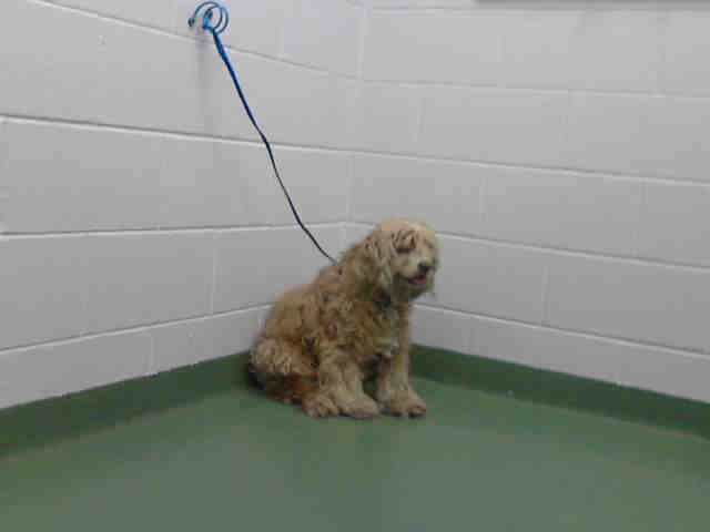 Found In Palmetto Florida Petharbor Com Animal Shelter Adopt A Pet Dogs Cats Puppies Kittens Humane Society Spca Dogs Animal Shelter Humane Society