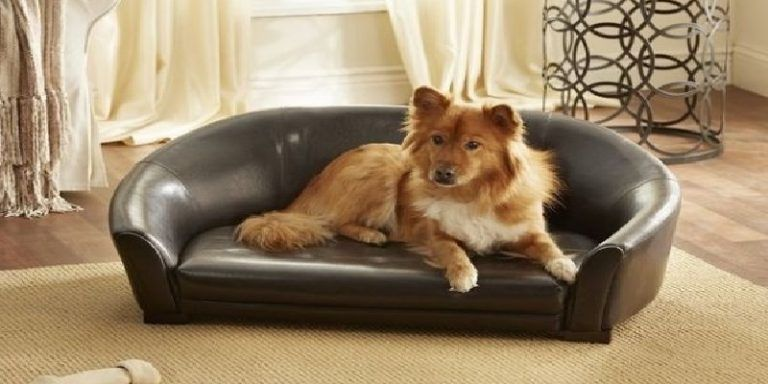 Couch Good For Dogs Best Sofa Dog Owners Luxury Dog Furniture Best Couches  For Dogs Most Durable Leather Sofa For Dogs Furniture Dog Beds Extra Large  Dog ...
