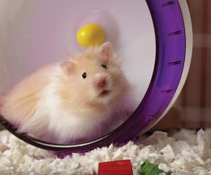 Creating A Fun Play Space For Small Pets Small Pets Hamster
