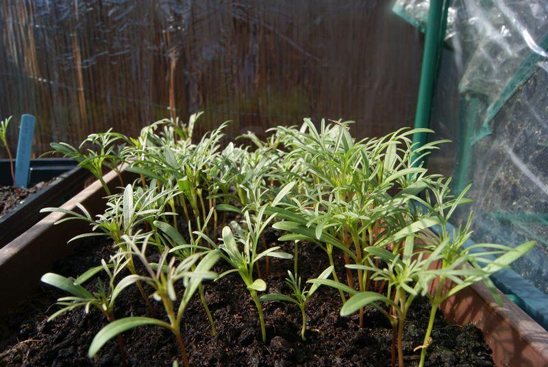 Project Pollinators Warren Home Garden Projects Garden Projects Plants Seedlings