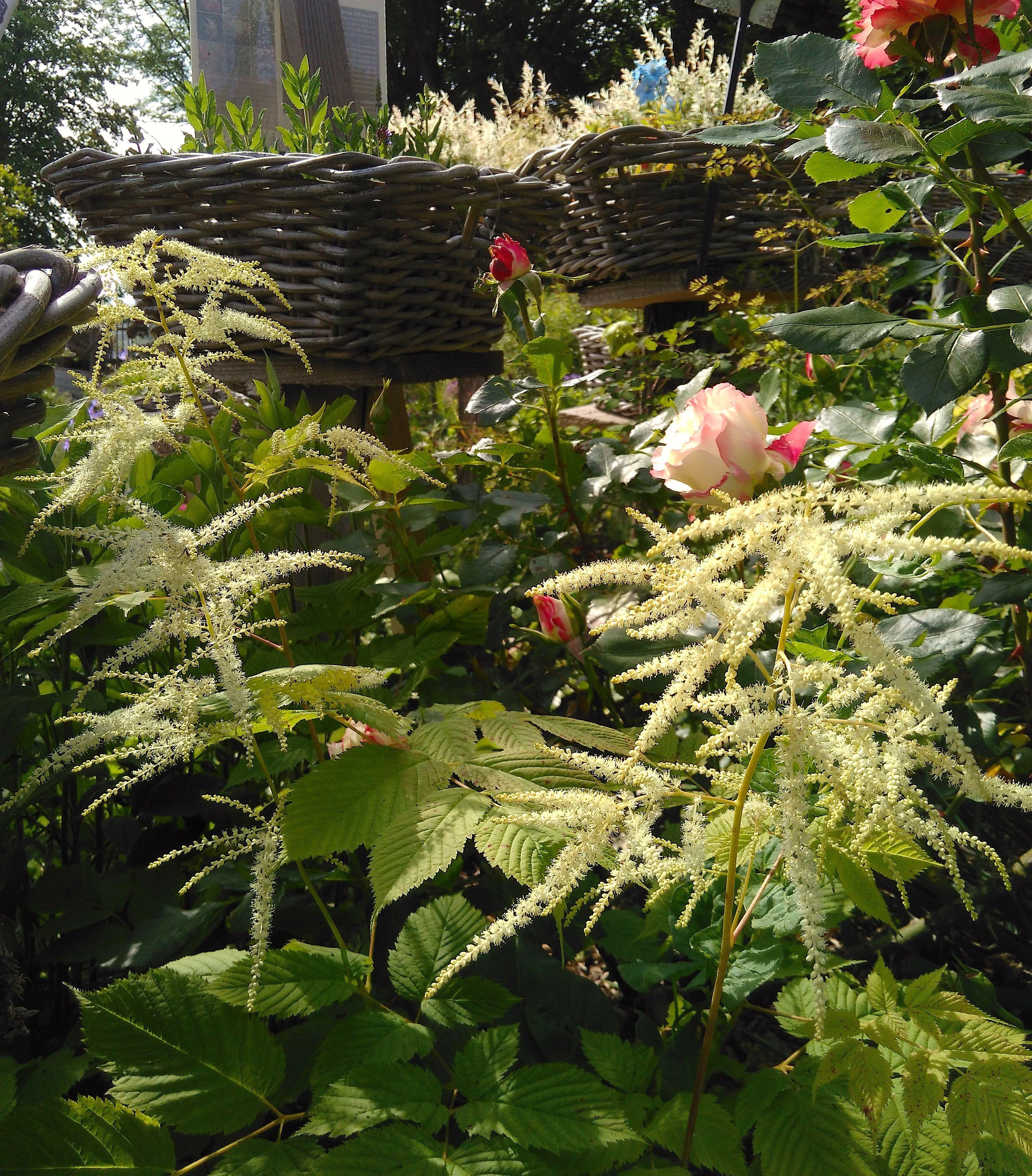 Nouvelle p pini re de plantes vivaces les jardins des for Jardin plantes vivaces