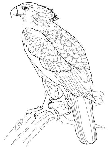 Philippine Eagle Coloring Page From Eagle Category Select From