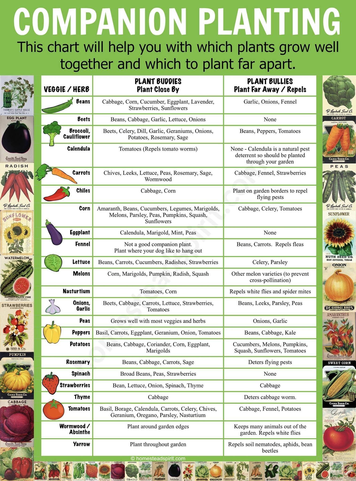 Companion Planting Hydroponicsgardening Chart Vegetable Gardening Squash