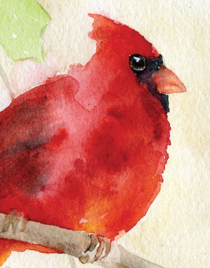 Cardinal And Holly Watercolor Christmas Card Set Watercolor