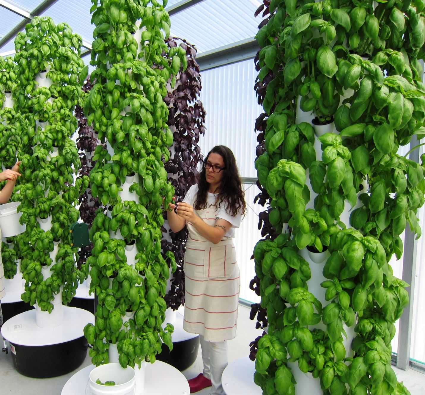 1000 images about Aeroponics on Pinterest Gardens Buckets and