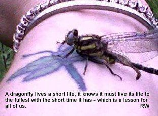 Amazing how this Dragonfly landed on me.  INTERESTING!