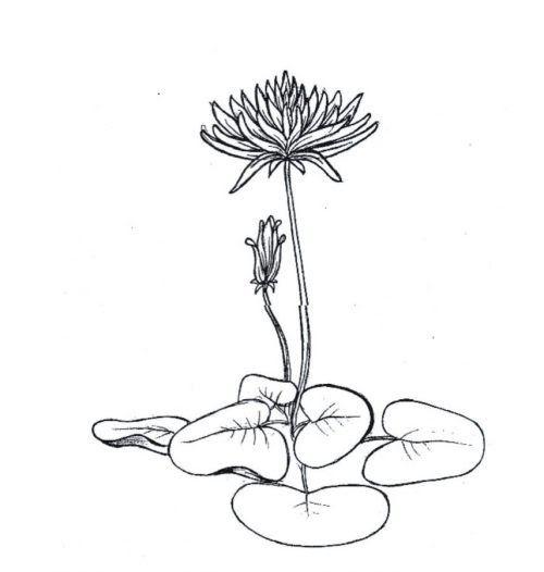 Fantastis 14 Gambar Flora Yang Mudah Digambar Beserta Warnanya Contoh Ragam Hias Flora Fauna Geometris Figuratif Beserta Di 2020 Lukisan Bunga Bunga Teratai Lukisan