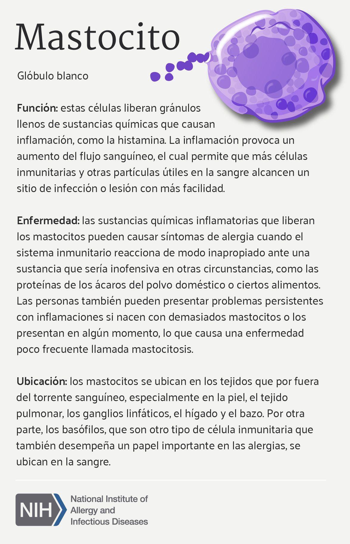 Mastocito (Mast Cell) en 2018 | Science and nature | Pinterest | El ...