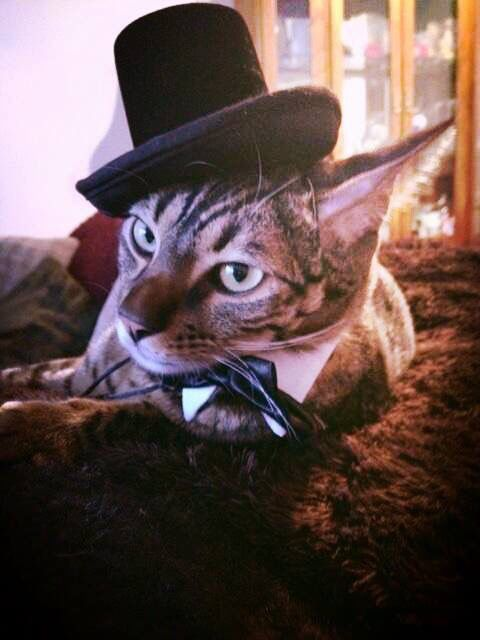 Milo was supposed to be the ring-bearer last year...but he got into the catnip the night before and was hung over!