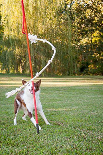 Diy Outdoor Dog Toys 62 Ideas In 2020 Outdoor Dog Toys Diy Dog