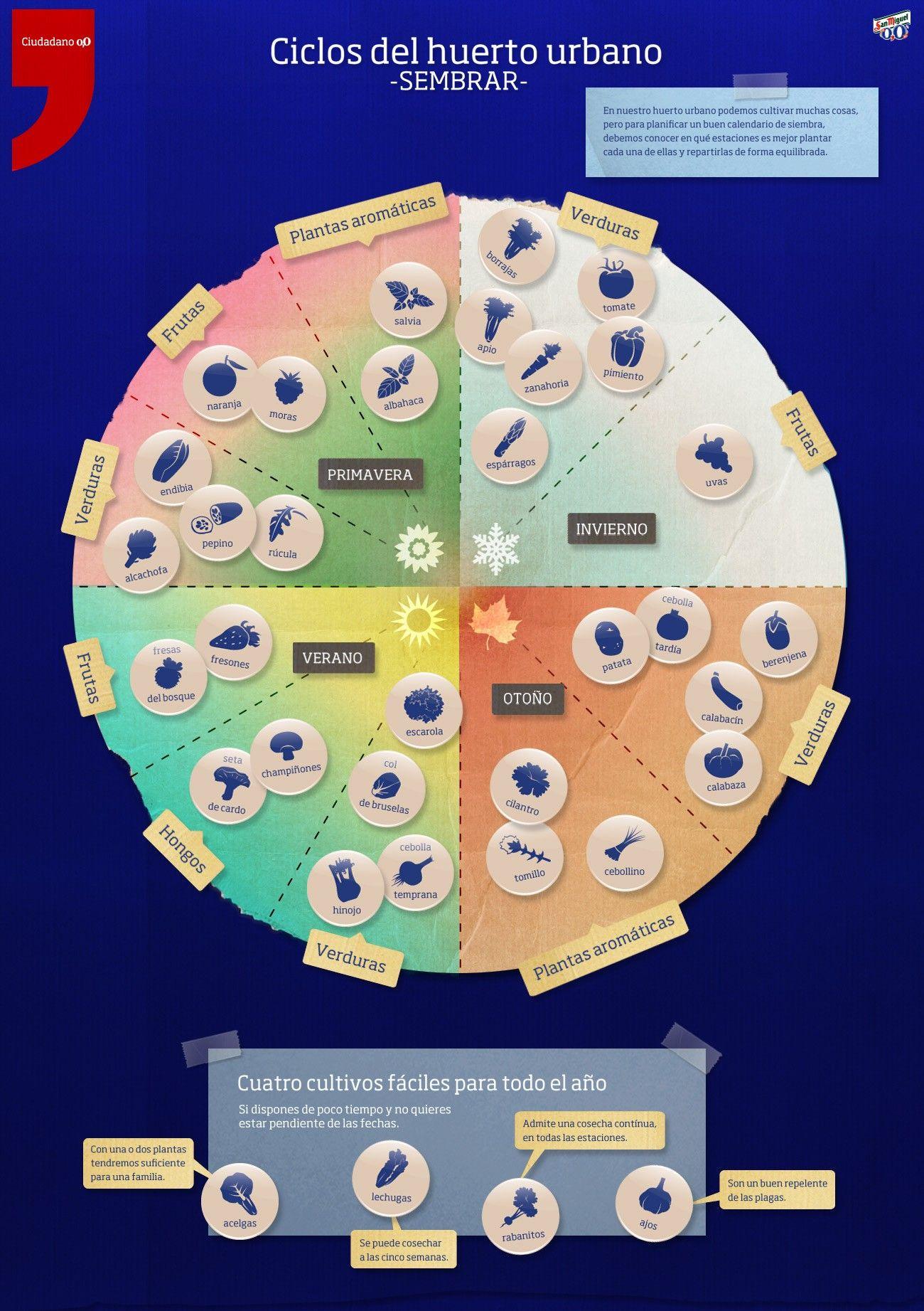 Infograf a ciclos del huerto sembrar asociaci n de for Asociacion de plantas en el huerto
