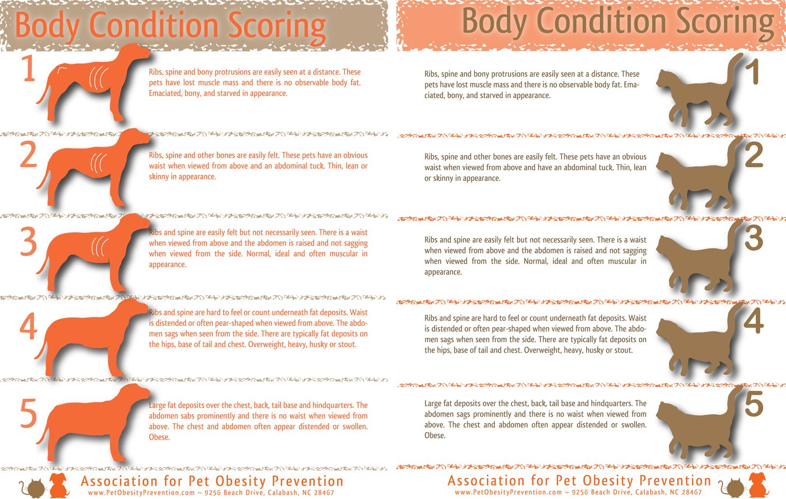 Pets Body Condition Scores Body Condition Best Dog Food Cat Weight Chart