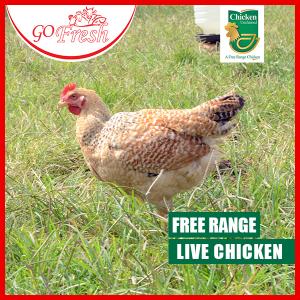Free-Range-Live-copy   go fresh meat shop   Buy chickens