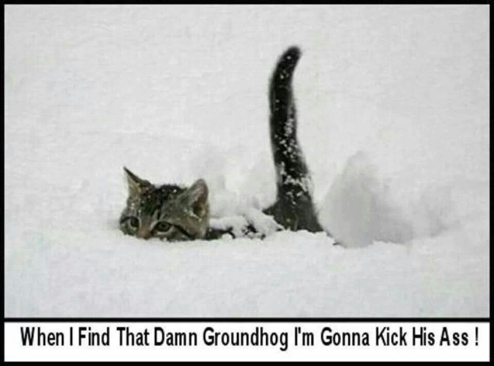 That's for sure!!! Kill the groundhog... yep Cats