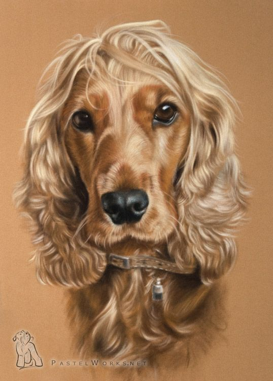 Dog portrait cocker spaniel chiens pinterest - Dessin de cocker ...