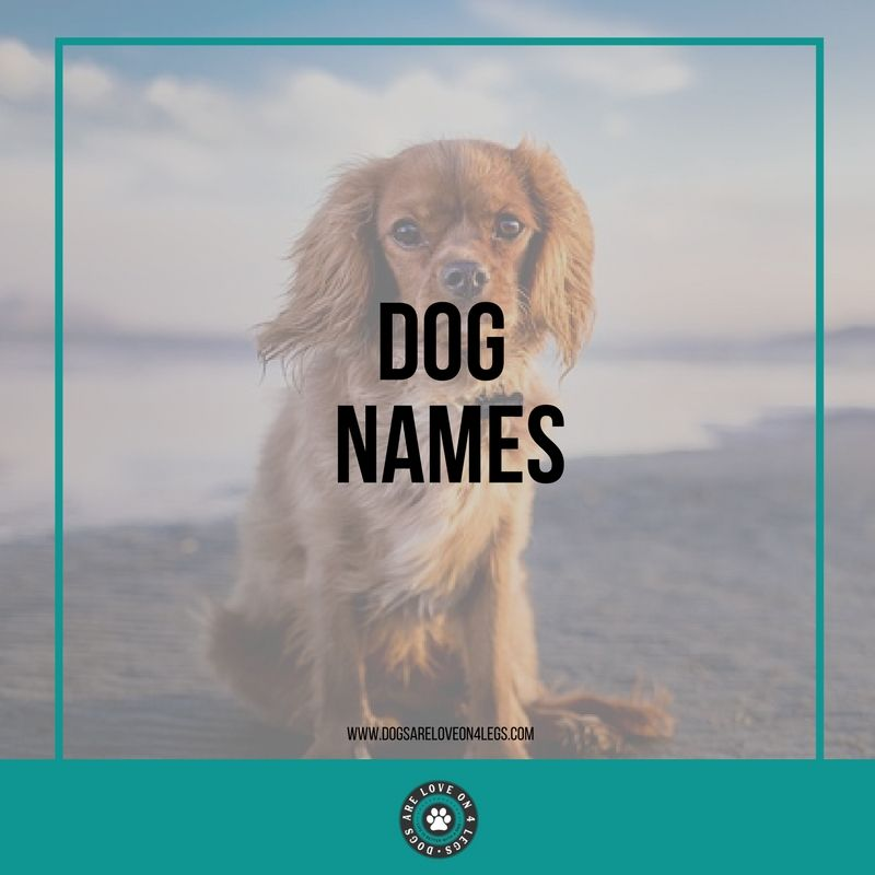 Dog Names Dog Names Girl Dog Names Cute Girl Dog Names
