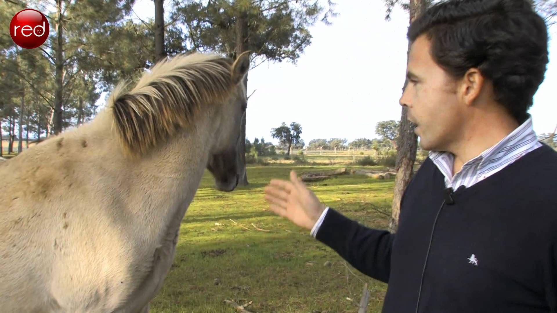 Cavalo de Sorraia - Reserva Natural de Alpiarça