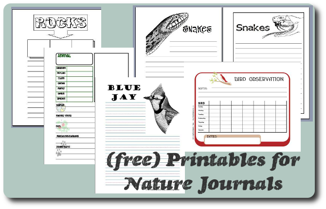 Minimalist Classroom Worksheets : Read her quot the minimalist guide to nature notebooking