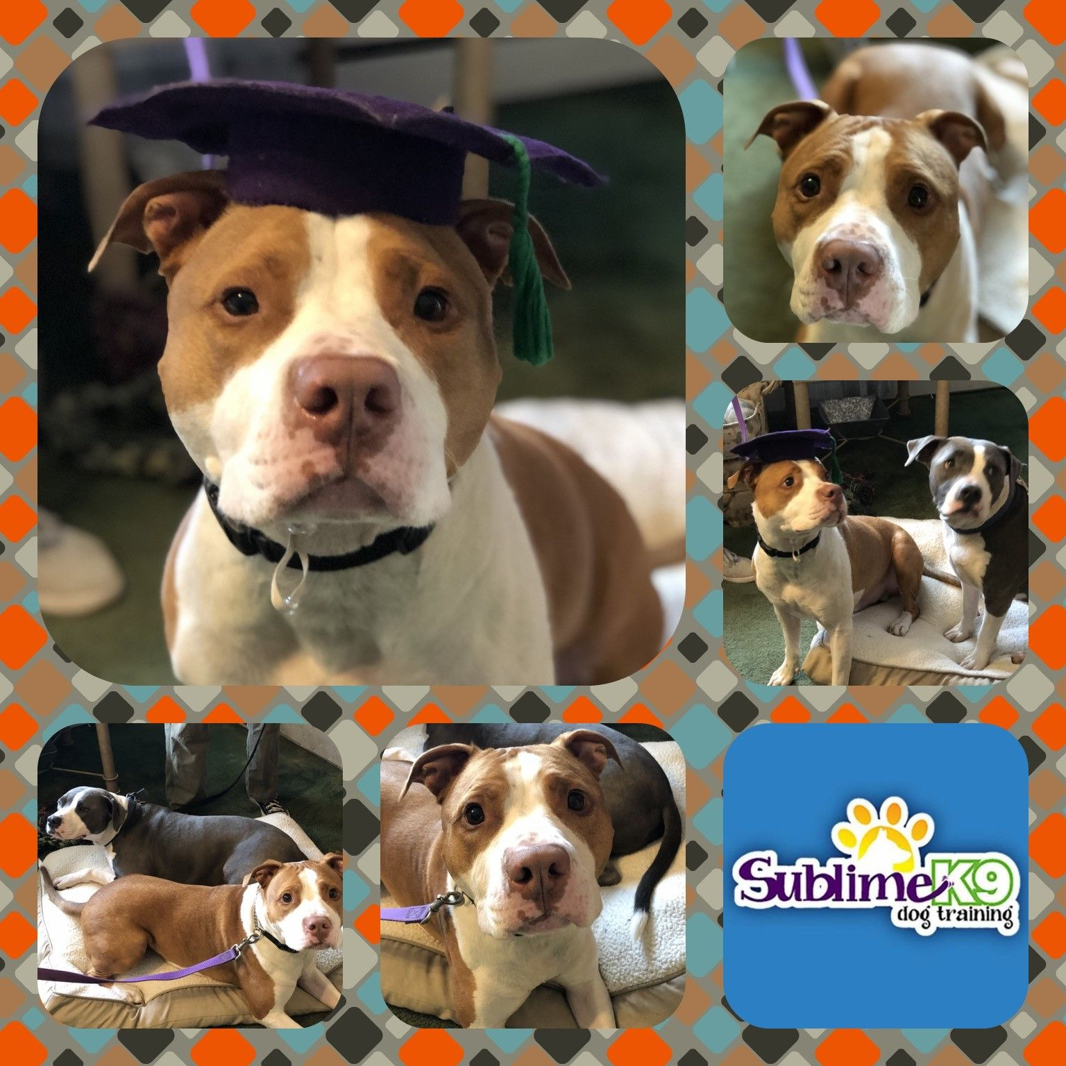 Long Island Dog Trainers Sublime K9 Dog Training Therapy Dogs