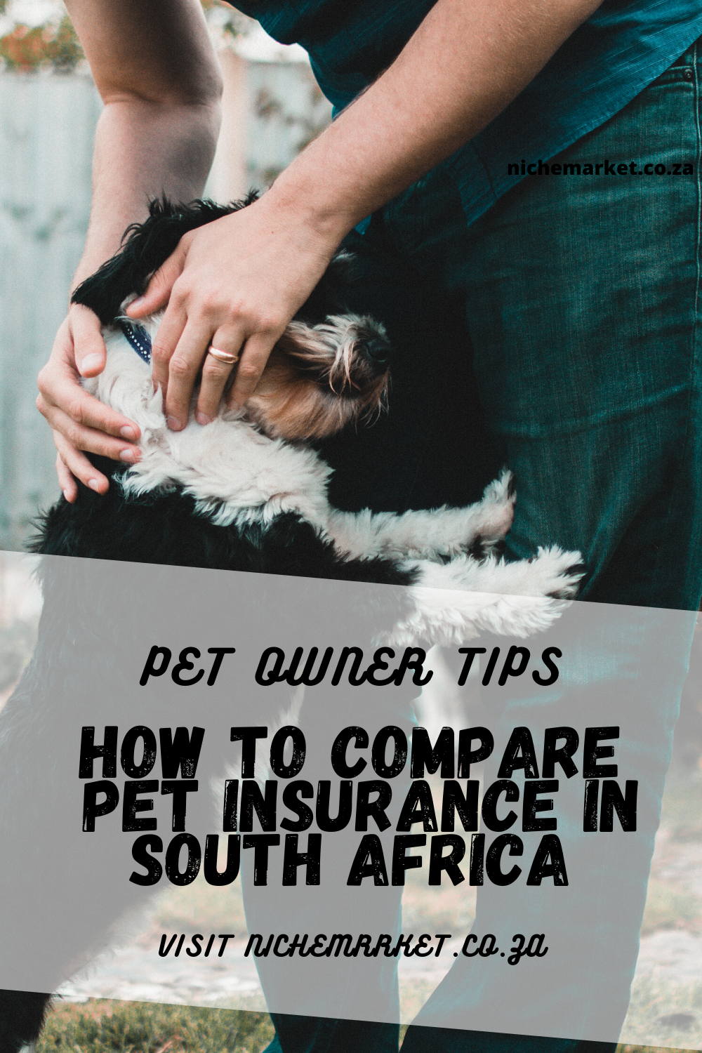 Where To Get Pet Insurance In South Africa In 2020 Pet Insurance Pets Veterinary Care