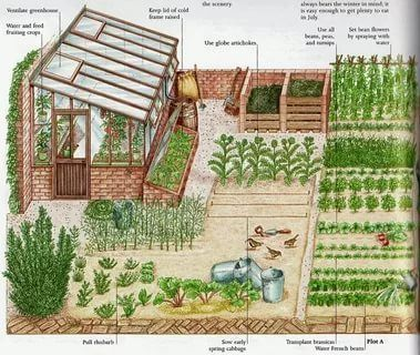 Photo of Garden and vegetable garden planning on the premises: 17 thousand pictures in Ya…