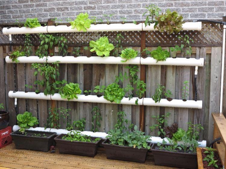 Zo begin jij jouw eigen verticale tuin! kip pinterest tuin