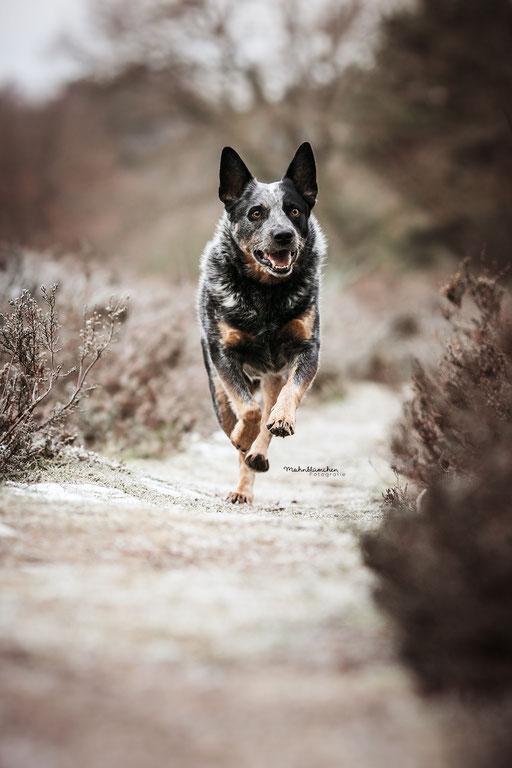 Hunde Mohnblumchen Fotografie In 2020 Hunde Fotos Hundefotos Hundefotografie