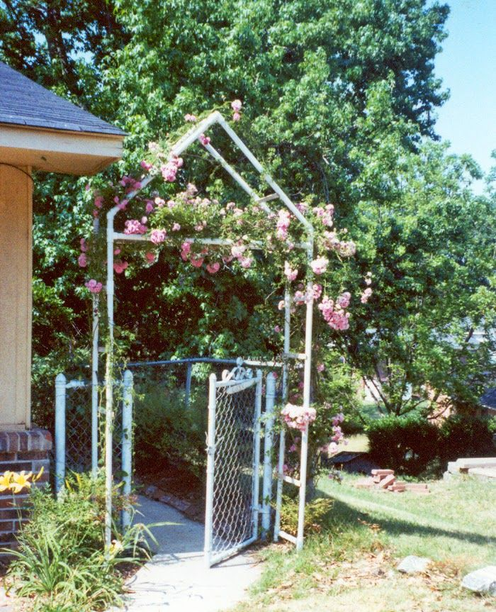 Trellis made from PVC pipe - Trellis Made From PVC Pipe Backyard Ideas Pinterest Garden