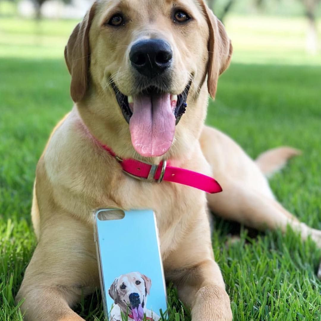 Custom Pet Phone Case Dog Lover Gifts Dog Lovers Pet Training