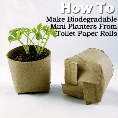 7 More Reused Items to Boost Your Garden | Toilet paper, Toilet ...