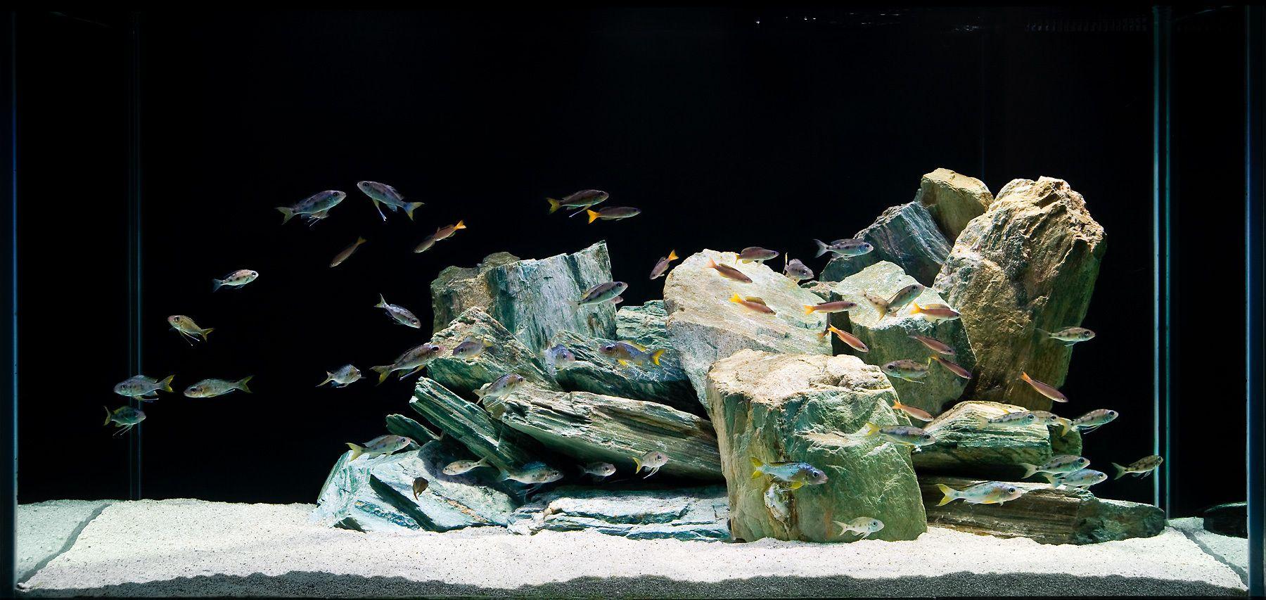 Aquarium Design Group - An Aquascape for Ventralis and ...