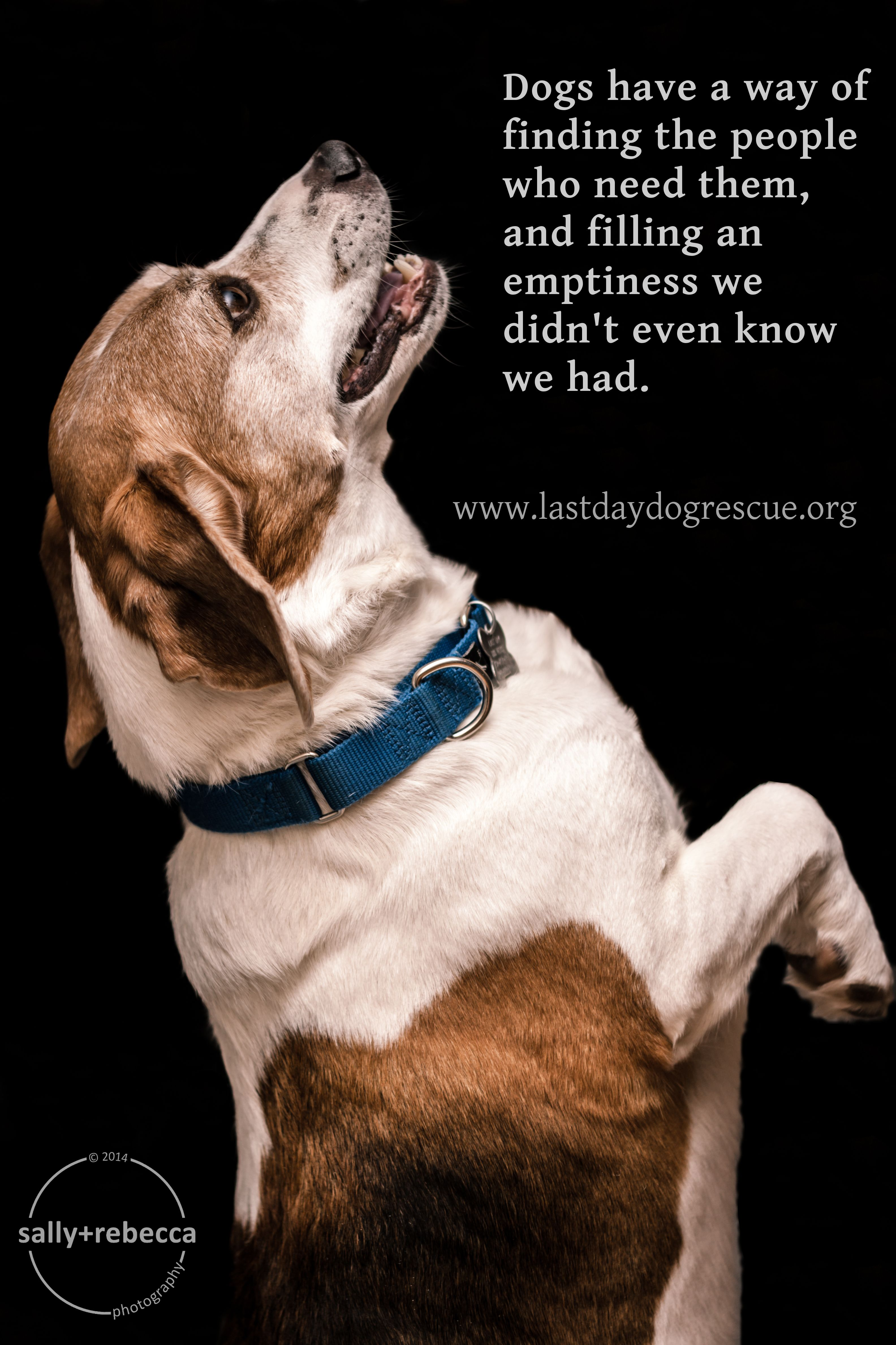#adopt #rescue #lastdaydogrescue #foster