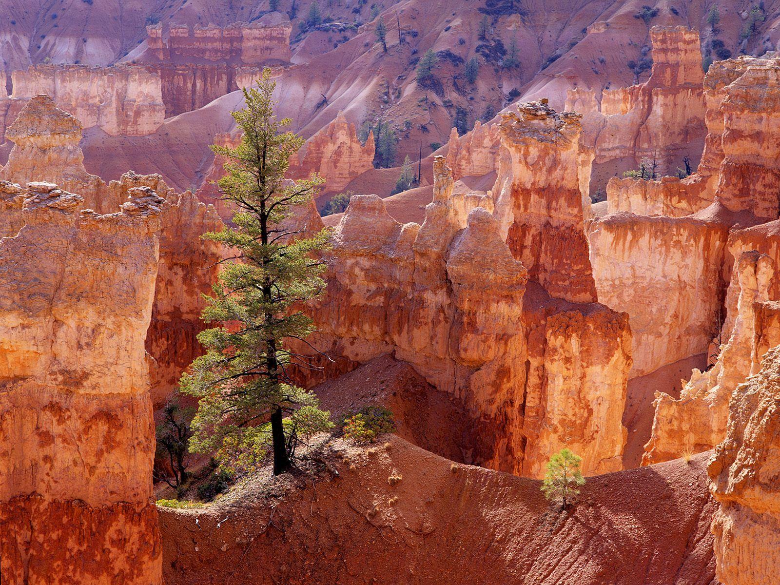 Bryce Canyon, Utah USA [OC] [5616x3159] : EarthPorn