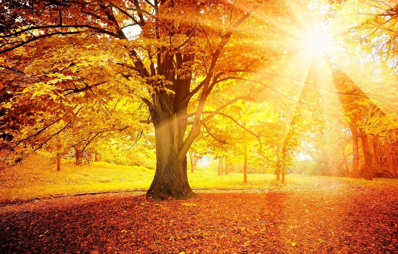 Обои forest, autumn, leaves, tree. Природа foto 17