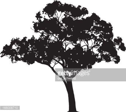 Eucalyptus Tree Silhouette Vector Tree Silhouette Tree Stencil