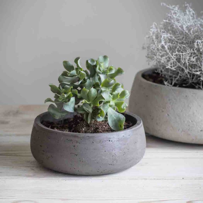 Image Result For Plants That Need Shallow Pots Plants Potted