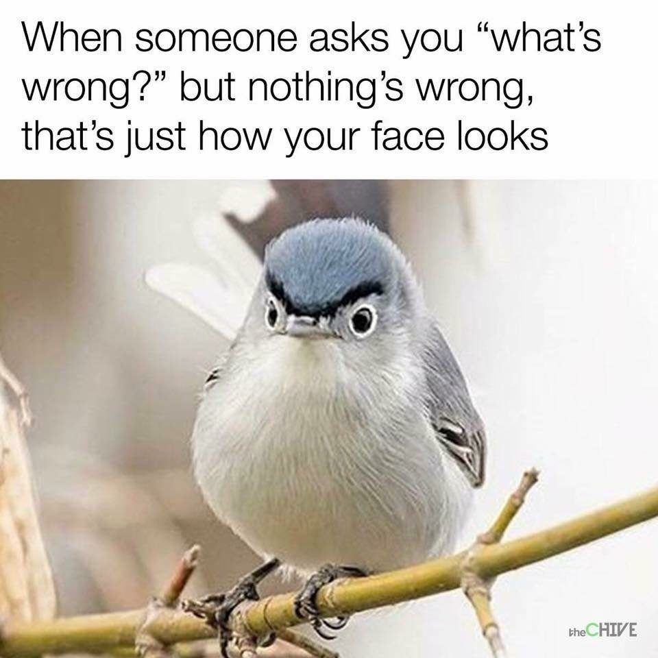 27 Memes That Are Pure Artistic Genius Funny Gallery