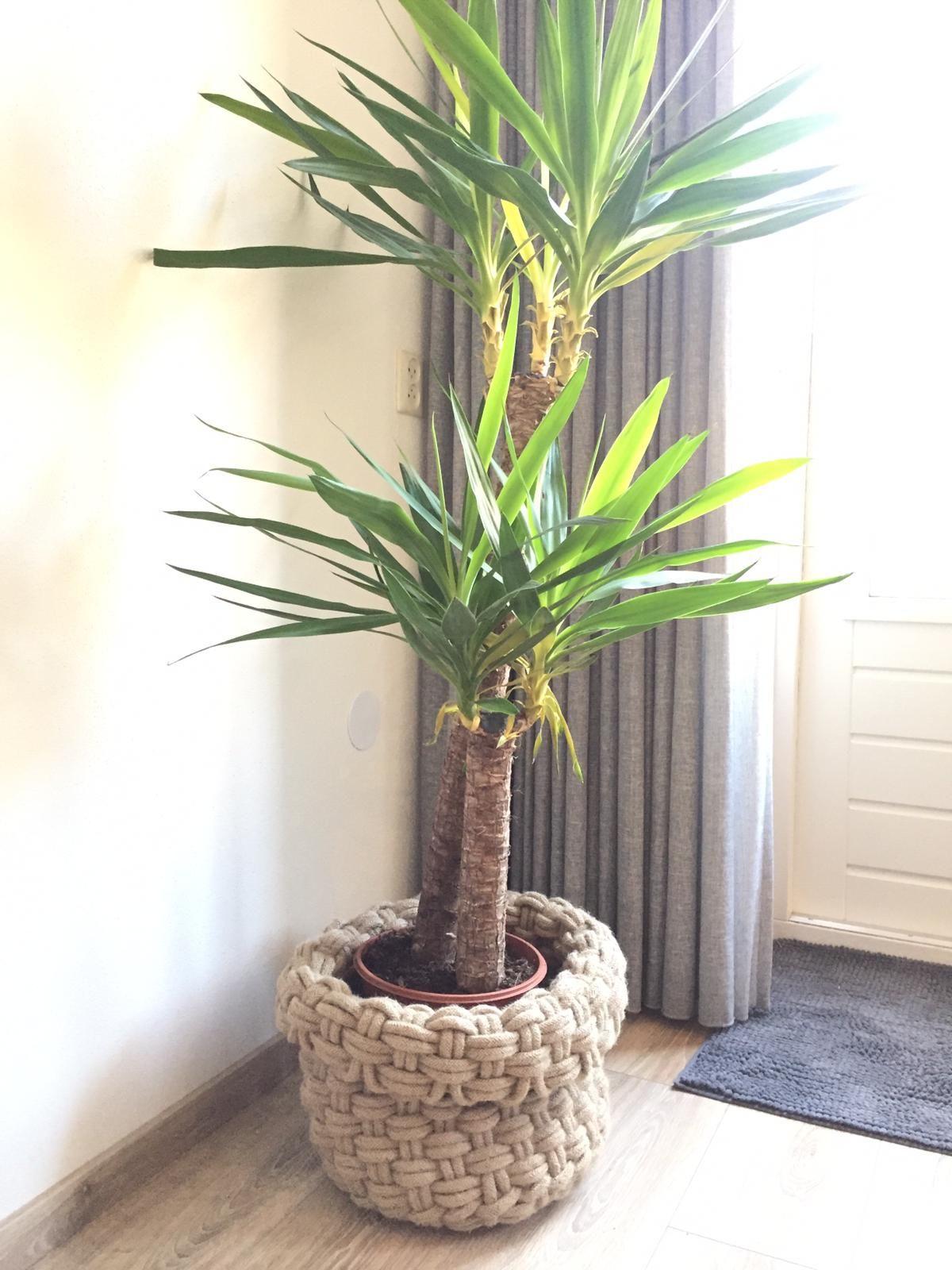 Best botanical trend homeware picks Large indoor plants