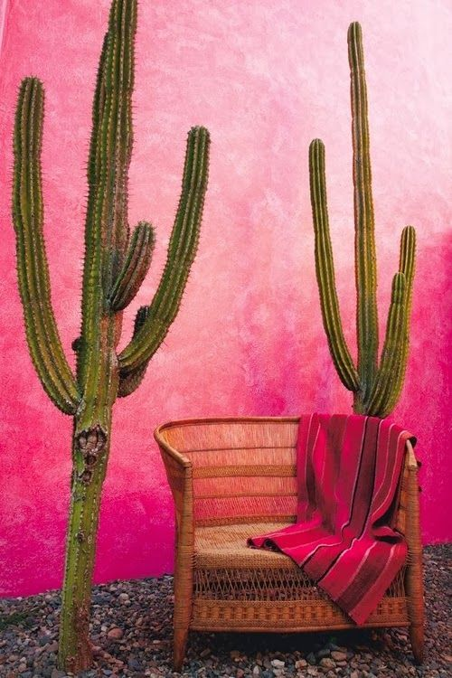 Very carefully staged, but I love the giant cactuses here and that puce to salmon pink stucco in the background. Would love to know where this is.