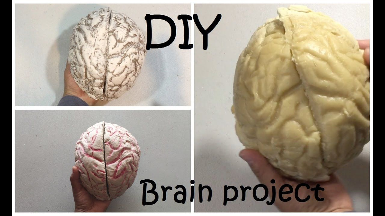How to Make a Brain Project DIY Brain #42 - YouTube | School | Pinterest